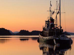 Seahorse at Dawn