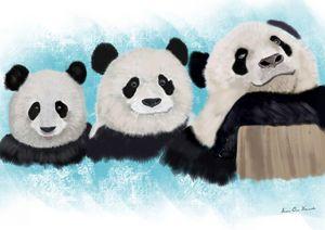 Three panda