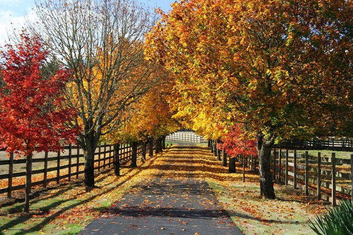 Fall Lane - PhotosbyChris