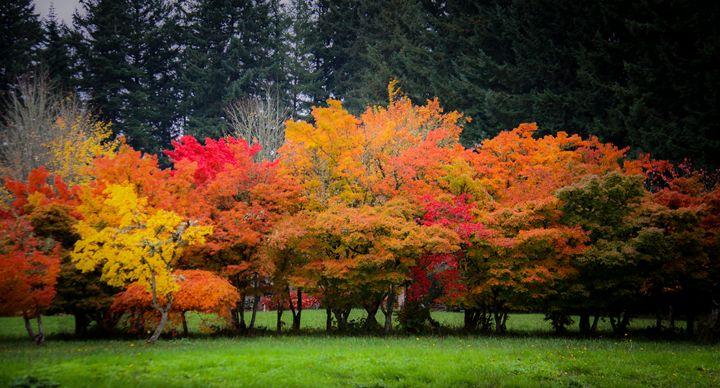 Fall Tree Grove - PhotosbyChris