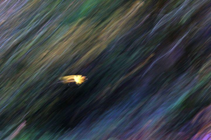 Falling Leaf 2 - PhotosbyChris