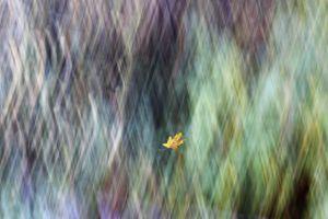 Falling Leaf 1