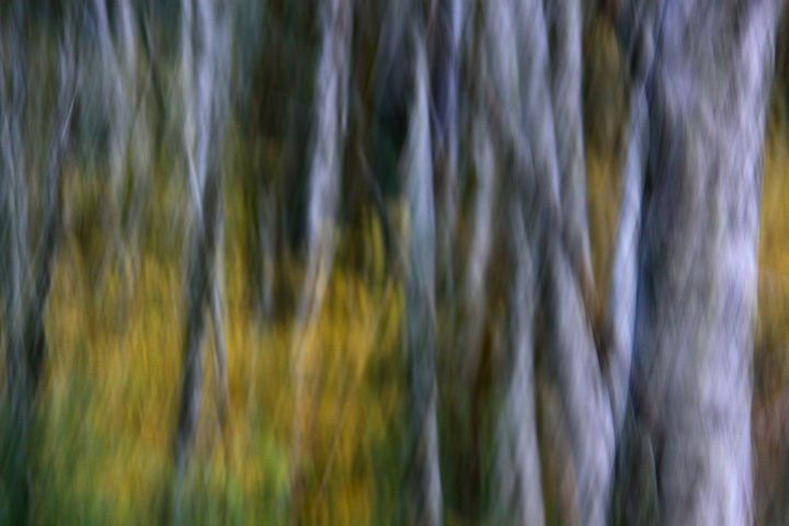 Into the Birches - PhotosbyChris