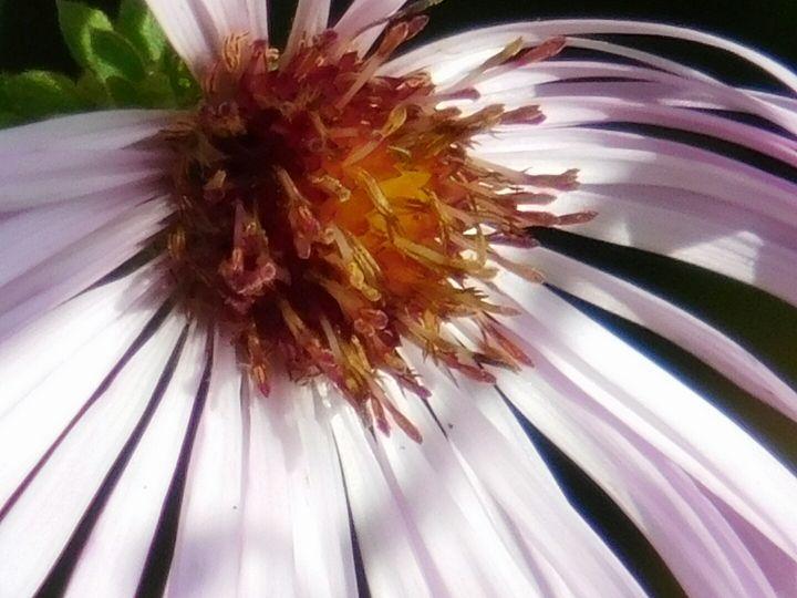 Flower. - Alana's Photographs