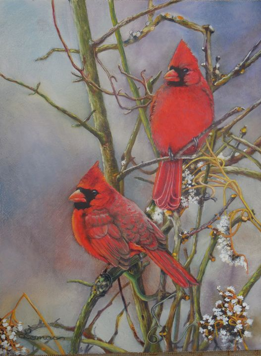 Male Cardinals 1 - Martina Lomas