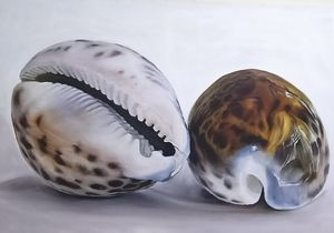 """AJE"" Cowries Shells"