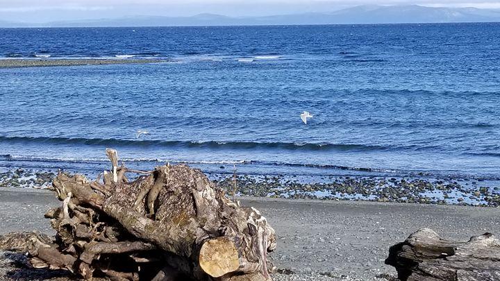 Seagull-tastic - Christina Taylor