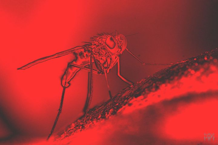Mars Has Flies - JFantasma Artistry