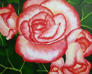 Begonia Flowers - Southwest & Florals by Carol