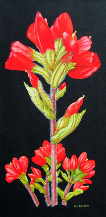 Indian Paintbrush Wild Flowers - Southwest & Florals by Carol