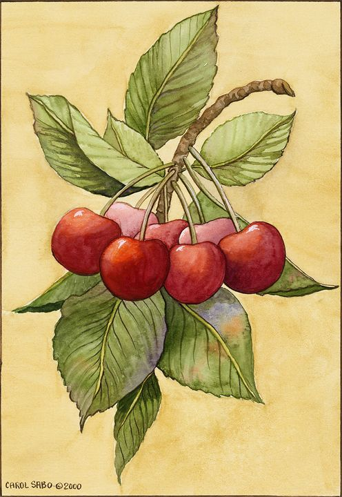 Cherries - Southwest & Florals by Carol
