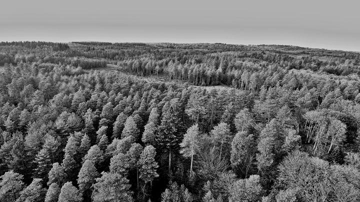 New forest - Petehazellphotography