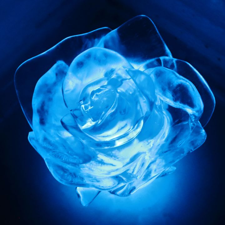 Frozen Blue Rose - Adventure Images