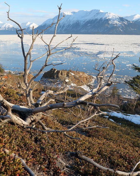 Iced Turnagain - Adventure Images