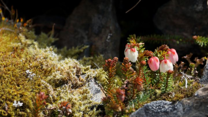 Crow Pass Flowers - Adventure Images
