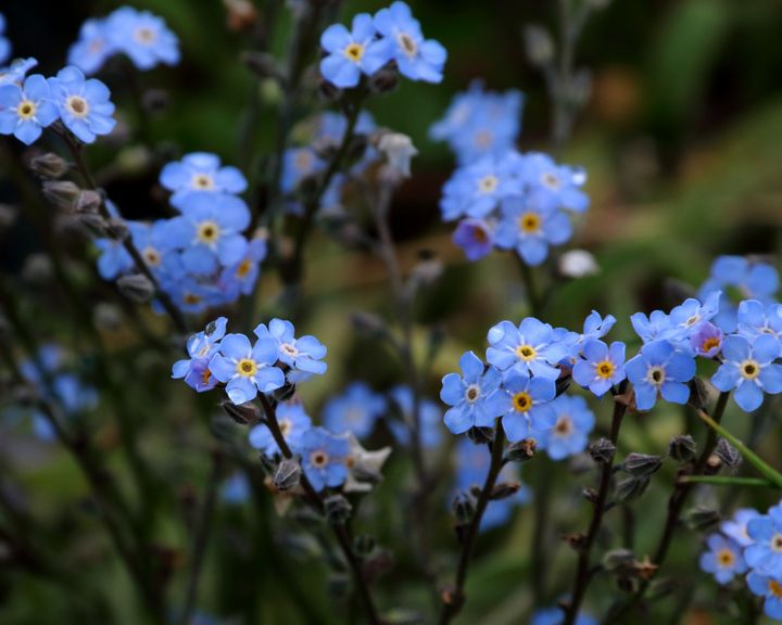 Forget Me Not - Adventure Images