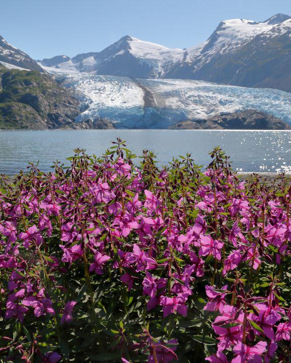 Portage Glacier - Adventure Images