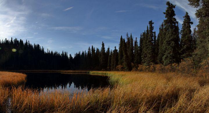 Pond In Denali National Park - Adventure Images