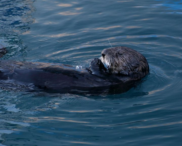 Snacking Otter - Adventure Images