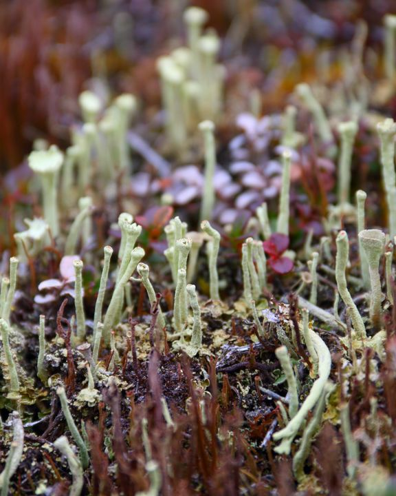 Growing In The Tundra - Adventure Images