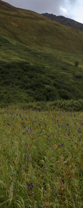 Meadow In The Valley - Adventure Images