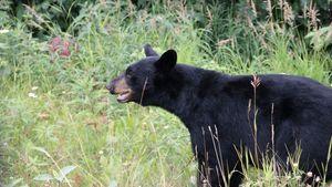 Base Bears