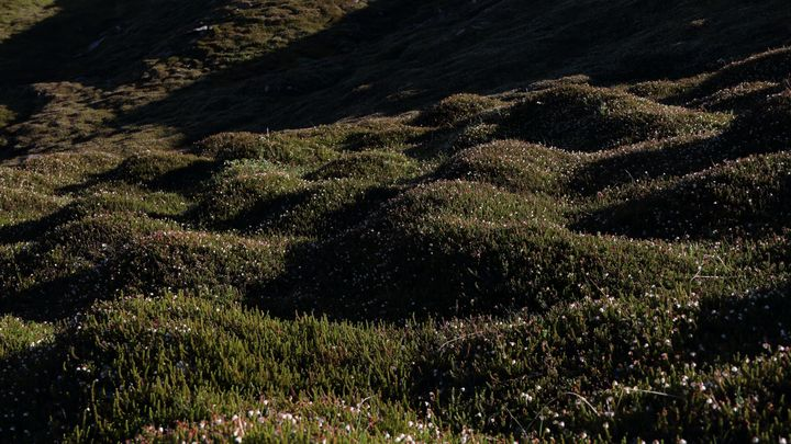 Flowery Mountain Tundra - Adventure Images