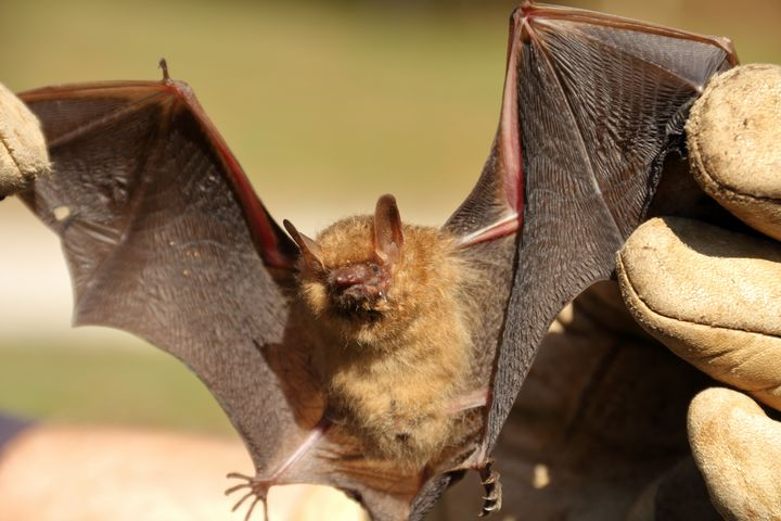 Gone Batty - Adventure Images