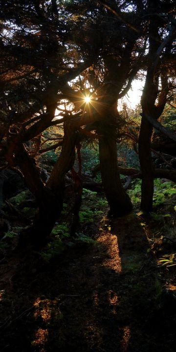 Sunburst Though The Trees - Adventure Images