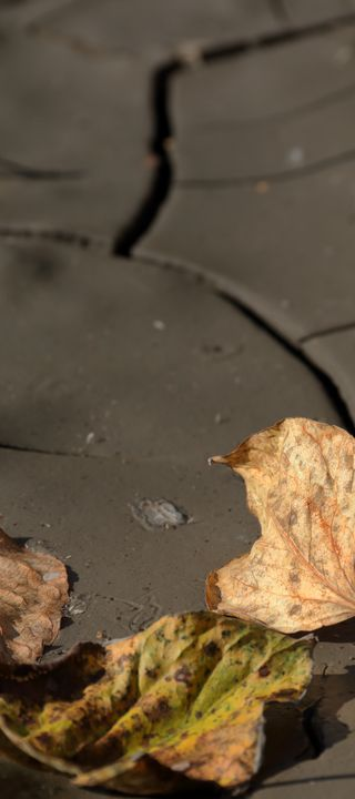 Leaves Drying In The Mud - Adventure Images