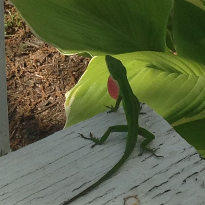 Spring lizard - Backroads Studio