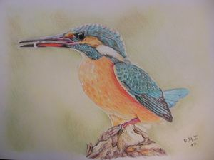 Kingfisher - Rubén Moreno Iniesto