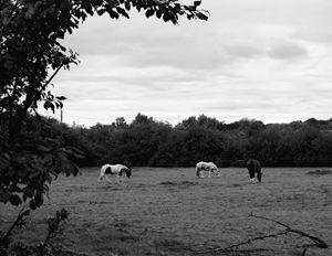 Hidden Horses