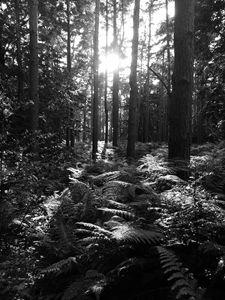 Woburn woods