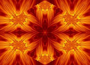Fire Flowers 5