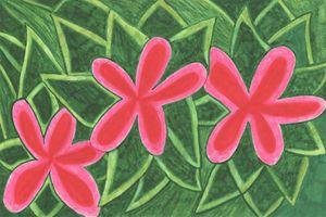 California Wildflowers: Pink
