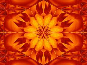 Fire Flowers 295