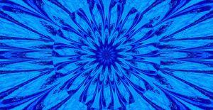 A Blue Wildflower 5