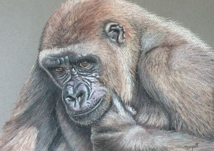 Gorilla - Tracey Bryant