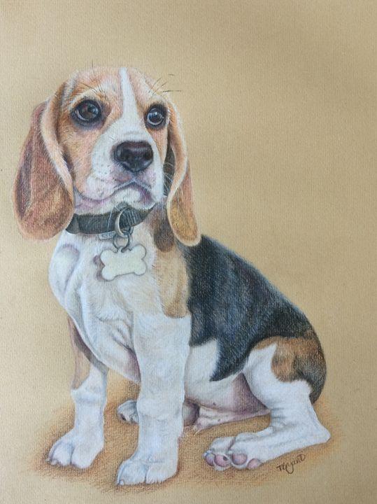 Beagle - Tracey Bryant