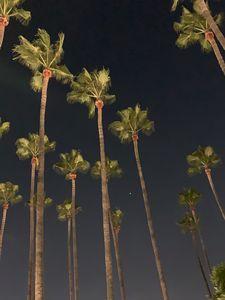 Night in LA full of love