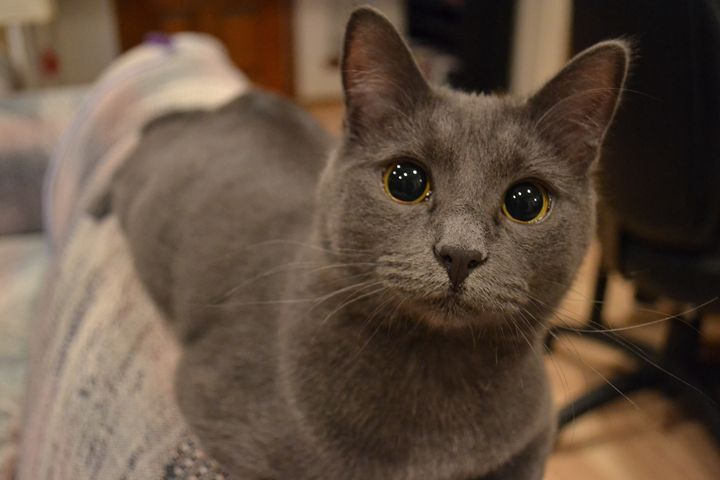 Russian Blue - Obvious Poetry