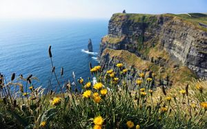 Dandelion's over Moher