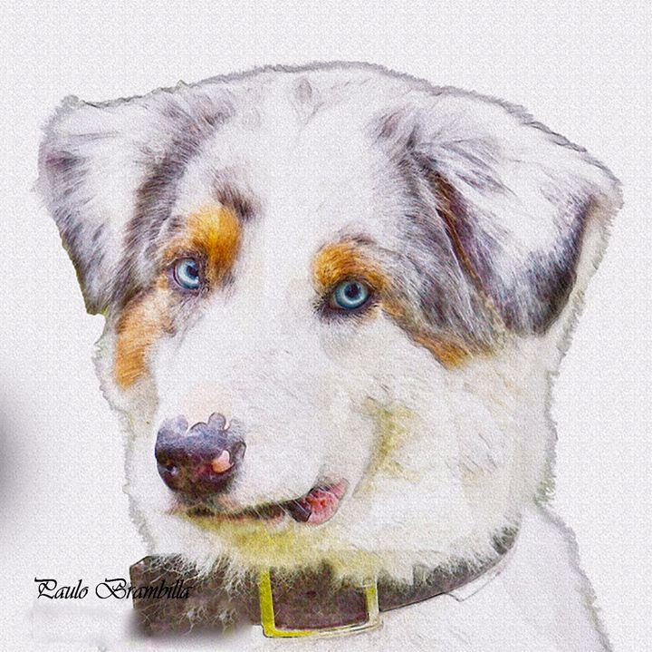 Cão em aquarela digital - Paulo Brambilla