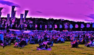 music festival crowd in purple