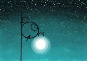Stars Sparkled