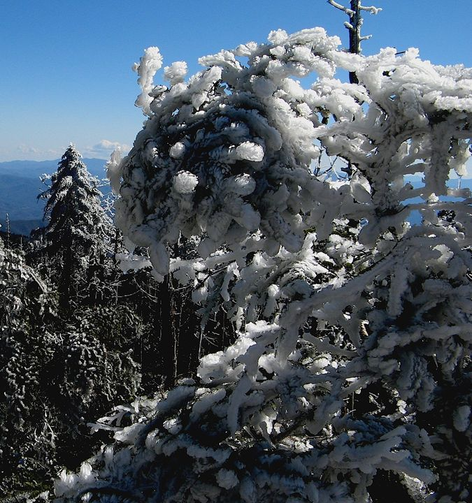 Trees Encased in Ice - Brian Deming