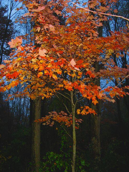 Arising Fall - Brian Deming