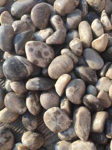 Petoskey stone aura