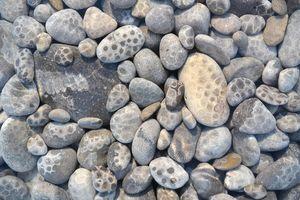 Petoskey stone collage